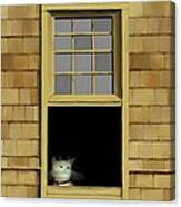 Window Cat    No. 2 Canvas Print