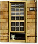Window Cat    No.1 Canvas Print