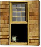 Window Cat    No.3 Canvas Print