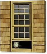 Window Cat    No.4 Canvas Print