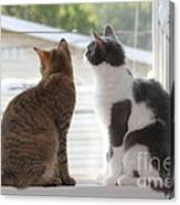 Window Cats Canvas Print