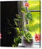 Window Geranium Canvas Print