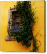 Window In Florence Canvas Print