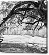 Window Oak - Bw Canvas Print