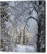 Window To Winter Canvas Print