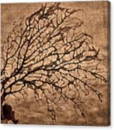 Windowpane Coral Canvas Print