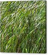 Windswept Cattails Canvas Print