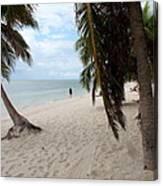 Windswept Palms Canvas Print