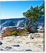 Windswept Tree On Top Of Sentinel Dome In Yosemite Np-ca Canvas Print