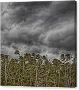 Windswept V3 Canvas Print
