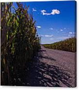 Windy Corn Canvas Print