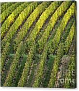 Wine Acreage In Germany Canvas Print
