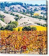 Wine Country Napa C.a. Canvas Print