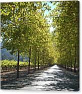 Wine Country Napa Canvas Print