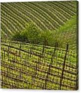 Wine Design Canvas Print
