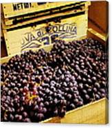Wine Grapes II Canvas Print
