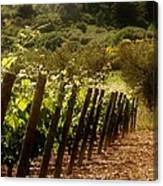 Wine Growing Pouring And Enjoying  Canvas Print