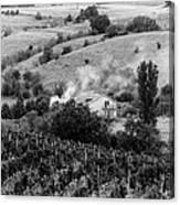 Wine Yard Canvas Print