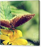 Wing Check Canvas Print