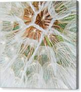 Winged Seeds Canvas Print