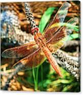 Winged Wonder Canvas Print