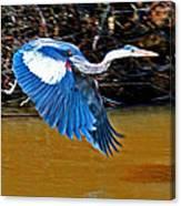 Wings In Flight Canvas Print