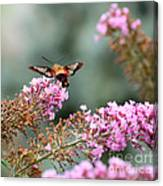 Wings In The Flowers Canvas Print