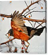 Wings Of A Robin Canvas Print