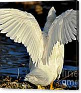 Wings Of A White Duck Canvas Print