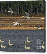 Wings Over Water 2 Canvas Print