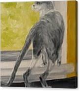 Winkie Wildcat Canvas Print