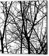 Winter 15 Canvas Print