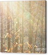 Winter Arbor Light Canvas Print