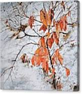 Winter Ash Canvas Print