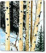 Winter Aspens Canvas Print
