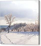 Winter At Scarborough Bluffs Canvas Print