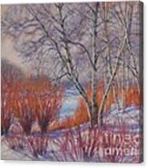 Winter Birches And Red Willows 1 Canvas Print