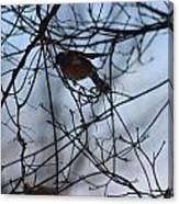 Winter Birds 2 Canvas Print