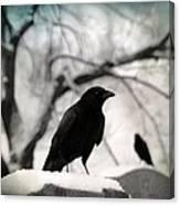 Winter Blackbirds Canvas Print