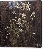 Winter Blossoms Canvas Print