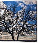 Winter Blue Skys Canvas Print
