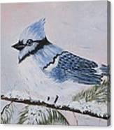 Winter Bluejay Canvas Print