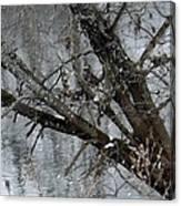 Winter Branch Canvas Print