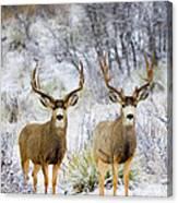 Winter Bucks Canvas Print