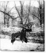 Winter Butterflies Canvas Print