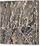 Winter Cattail Abstract Canvas Print