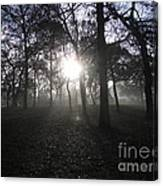 Winter Dawn Light Through Trees Canvas Print