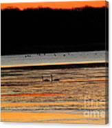 Winter Dawn Swans Canvas Print