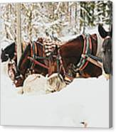 Horses Eating In Snow Canvas Print