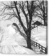 Winter Driveway Canvas Print